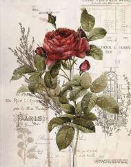 Transfer Botanic Rose bij MaisonMansion