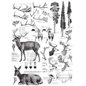 Transfer Deer MaisonMansion