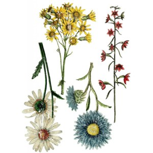Wild flower Botanicals transfer IOD