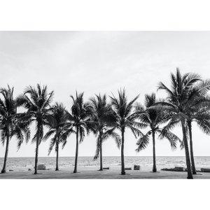 Palm Trees decoupage