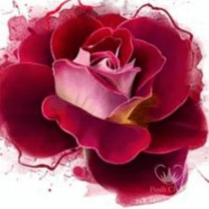 Radiant rose Posh Decoupage