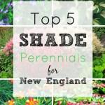 5 Shade Perennials For Your New England Garden Maison Mass