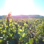 côtes du rhône vin maison rivier