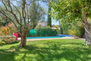 Swimming pool and olive tree in holiday rental guest house aix en provence maison saint jerome