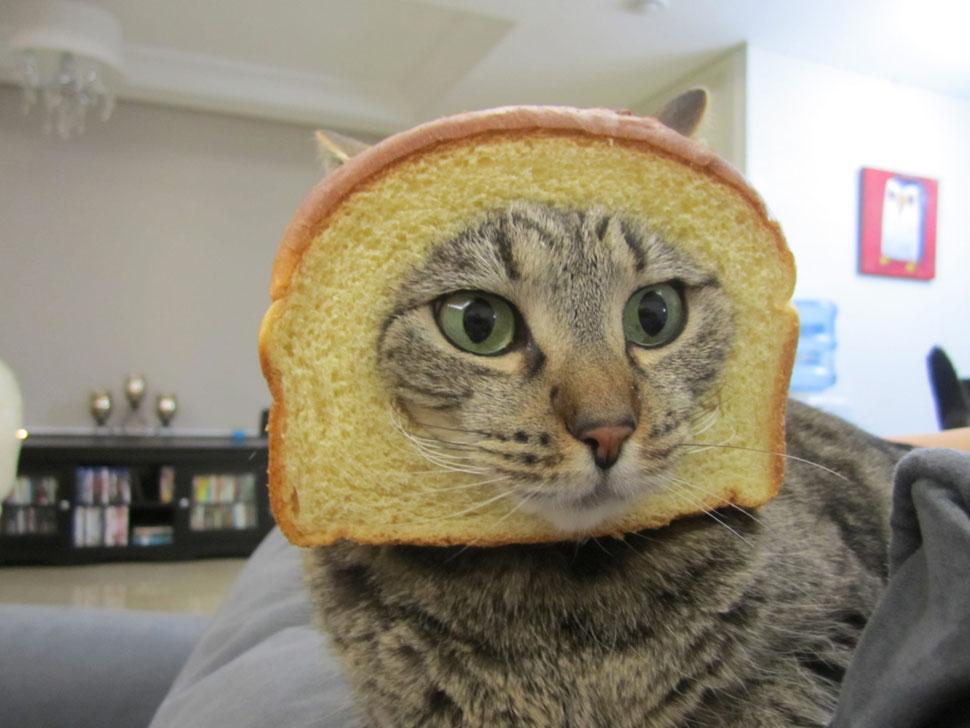 De toute façon, personne n'aime vraiment les chats