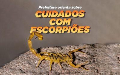 Prefeitura de Pinhais orienta população sobre cuidados com escorpiões