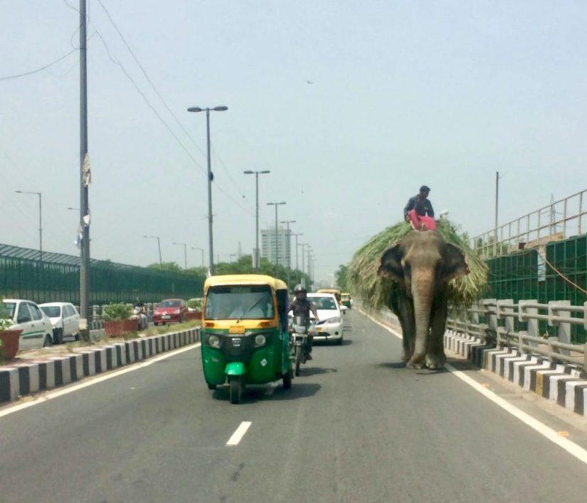 Elefante nas ruas da Índia
