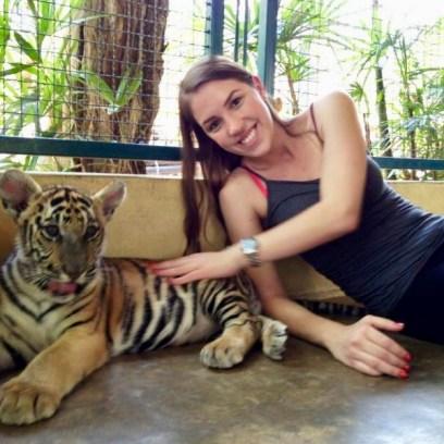 Bebê tigre no Tiger Kingdom, Chiang Mai, Tailândia