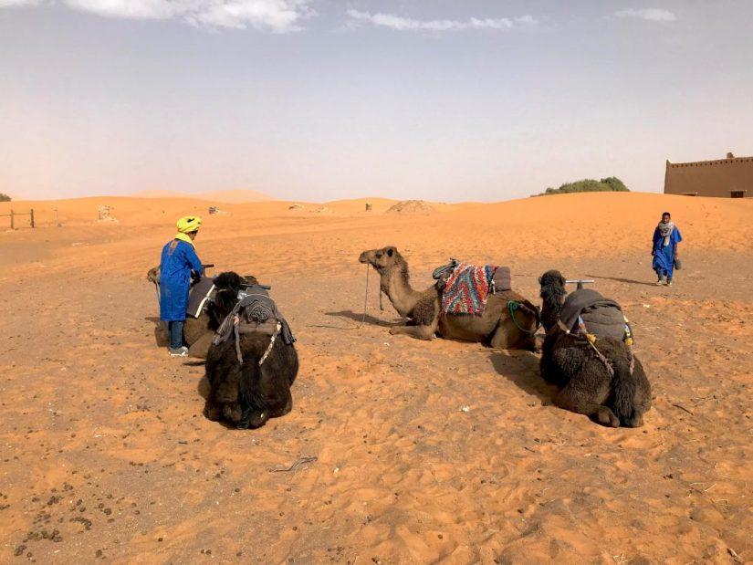 Passeio de camelo no deserto, Deserto do Saara, Marrocos, Merzouga