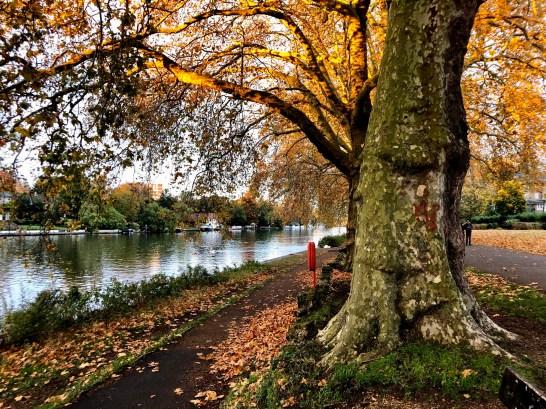 Canbury Gardens, Rio Tamisa, Londres no outrono