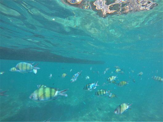 Snorkling in Maya Bay