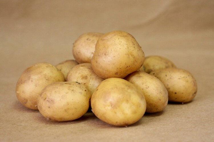 возвращения фронтов картофель сорта фото таблица так можно использовать
