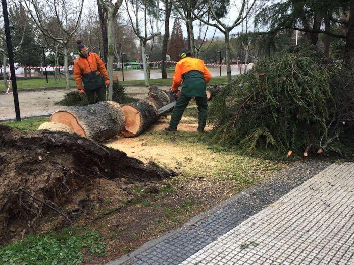 La incesante lluvia y viento en Majadahonda y Oeste de Madrid dejan varios árboles derribados