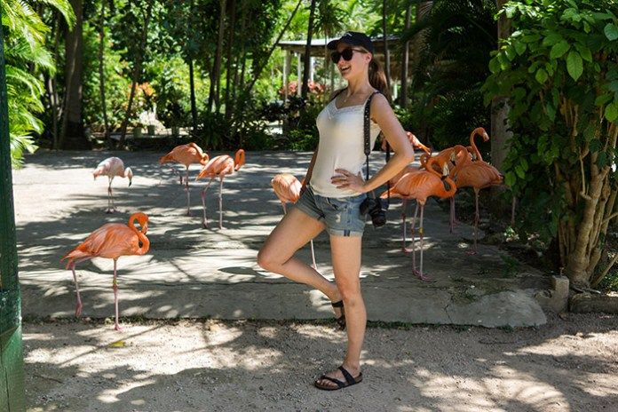Maja posing with pink flamingos at Adastra Gardens Zoo and Conservation Center.