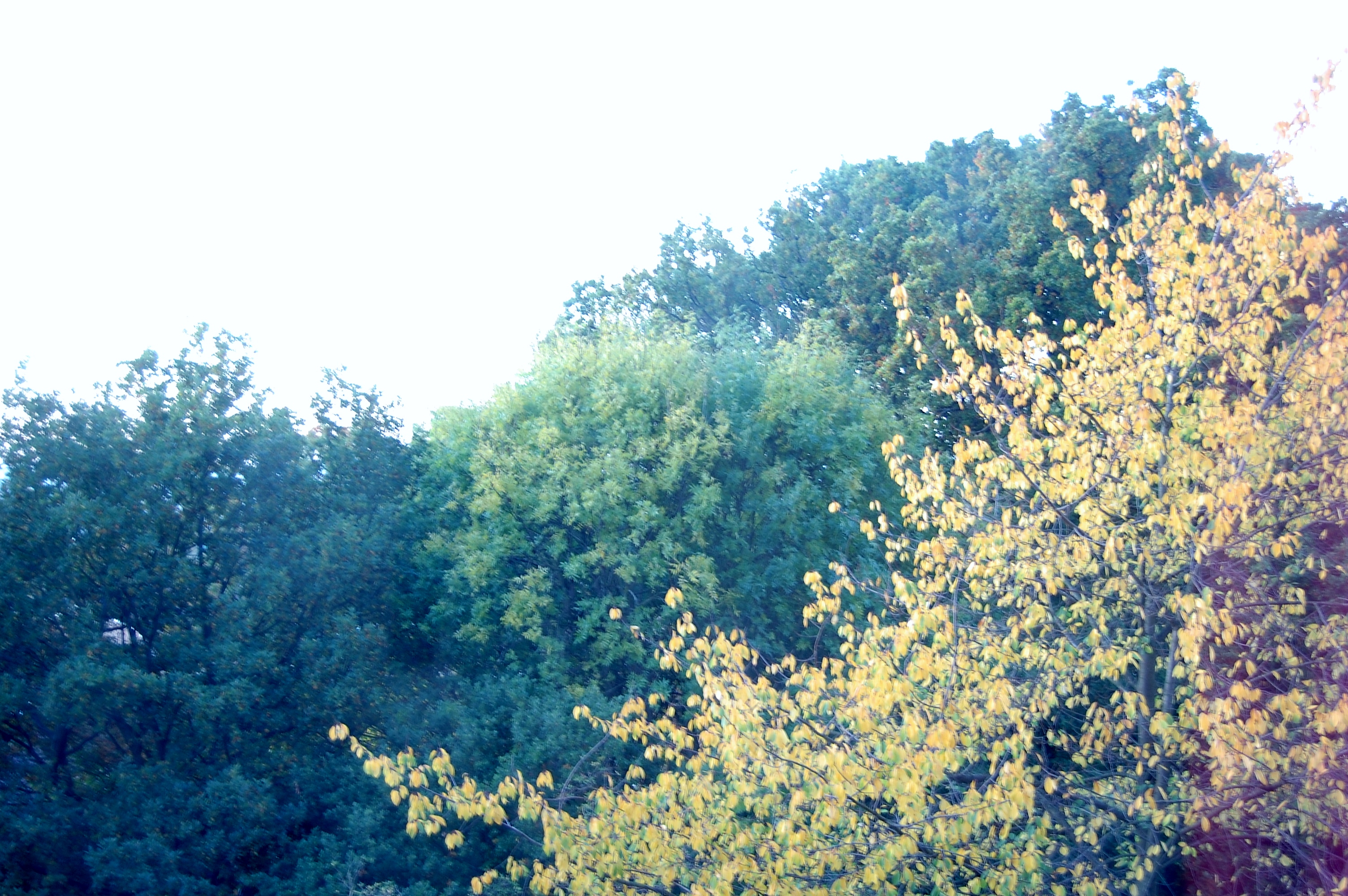 autumn 2015 changing leaves