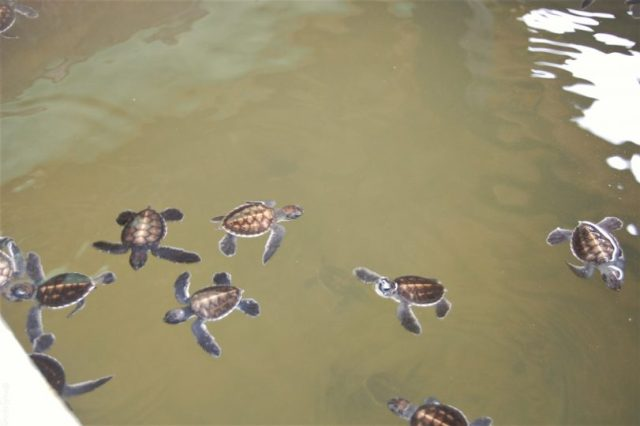 Top 3 Travel websites- Sri Lanka turtle sanctuary