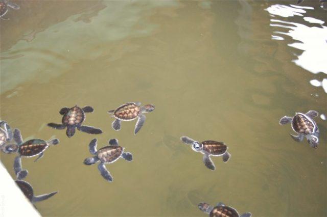 Top 3 Travel websites- Sri Lanka turtle sanctuary