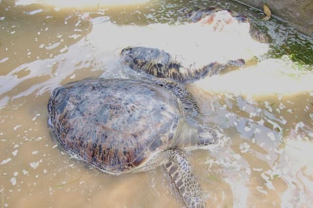 3 must see things in bali- turtle beach