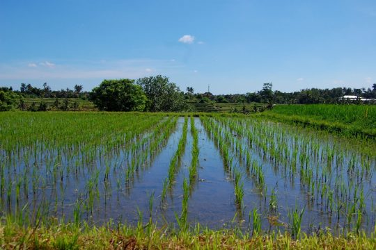 5 things no one tells you about travel - Bali rice field