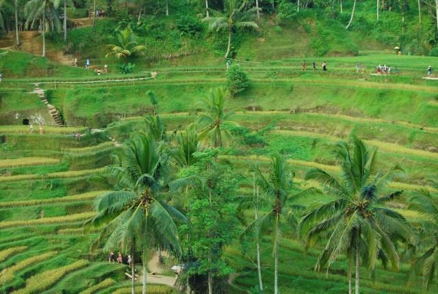 looking back at 2017- Rice Terrace, Bali