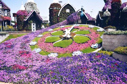 5 travel solutions I wish I knew about- dubai miracle gardens
