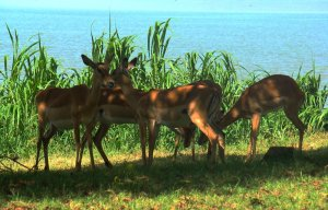 places to visit in Kisumu