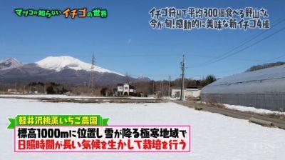 matuko-ichigo22
