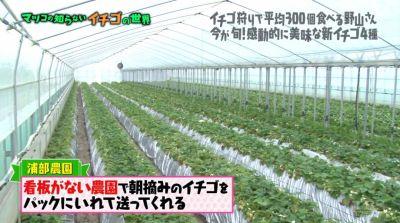 matuko-ichigo30