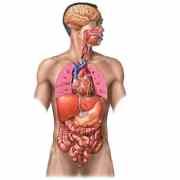 Vocabulaire espagnol –  El cuerpo humano