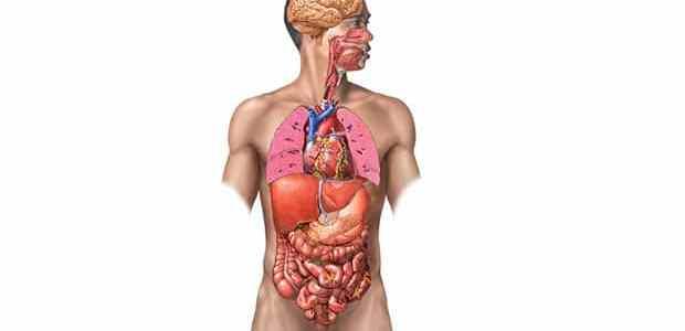 Quiz – El Cuerpo Humano