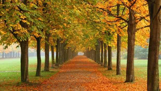 autumn_in_dresden