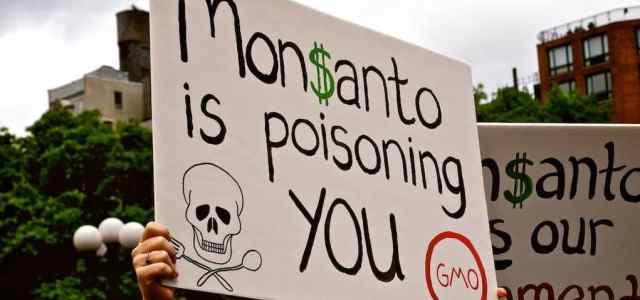 Bayer – Monsanto: un rapprochement qui fait grincer les dents