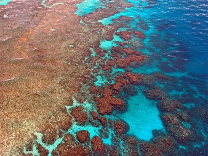A cause du réchauffement climatique, quel est le pourcentage de corail perdu pour la partie nord de la Grande Barrière de corail ?