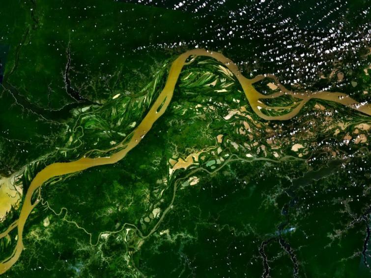 La déforestation en Amazonie a augmenté en mars 2020.