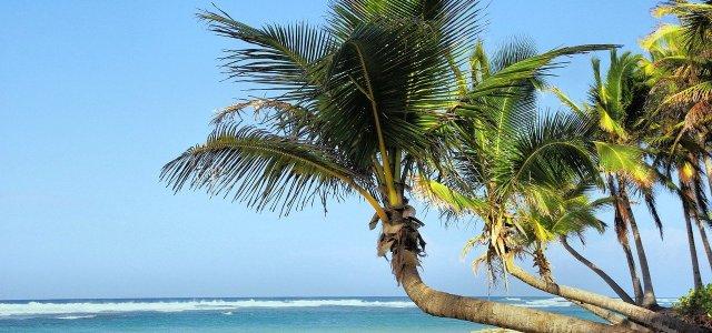Reportage : faire sa prépa sur l'île de La Réunion