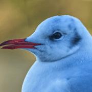 Podcast #2 – L'interface homme / animal dans les épidémies