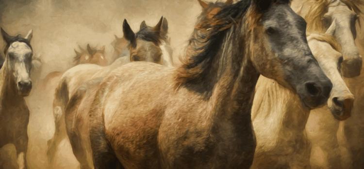 Podcast #1 – La domestication de l'homme par l'animal