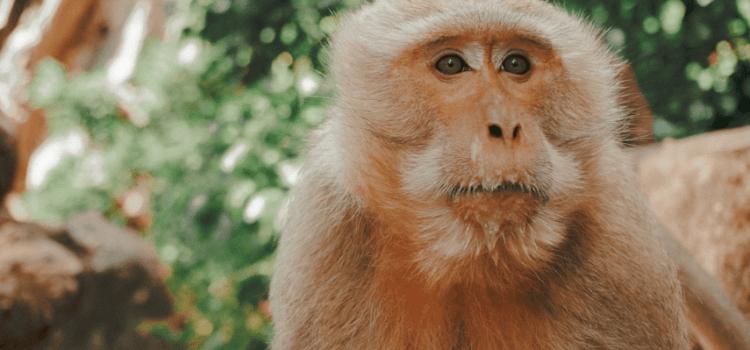 Podcast #7 – Étudier les animaux pour faire progresser la médecine