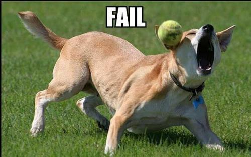 dog-misses-ball1