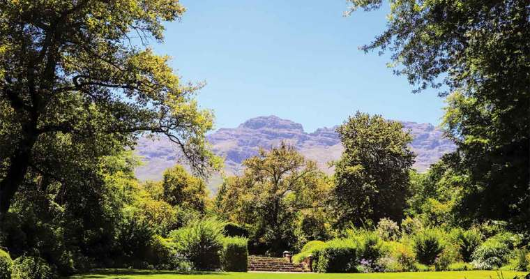 Winelands in Cape Town   South Africa