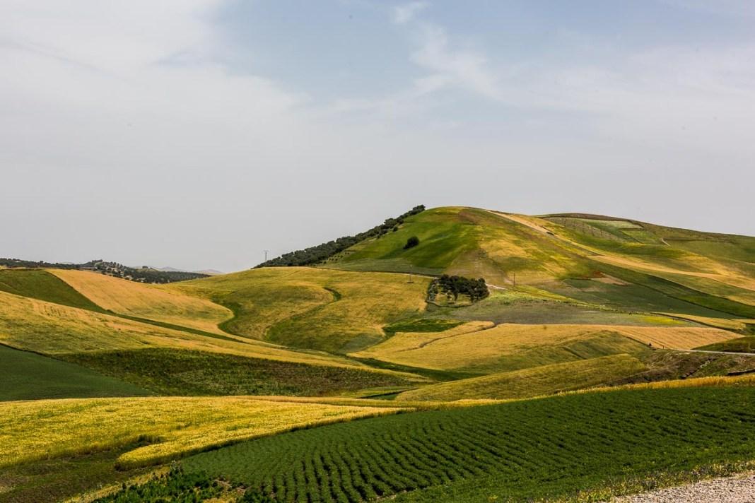 Übersichtlich gegliederte Felder der landwirtschaftlichen Nutzung