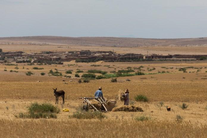 Hier wird Landwirtschaft noch mit der Hand gemacht
