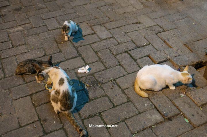 Kucing yang kelaperan