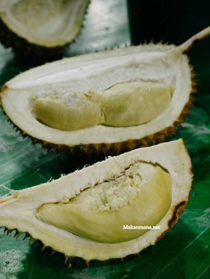 durian bolang