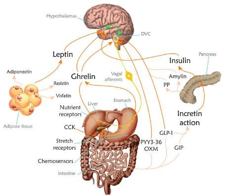 how-to-balance-hormones