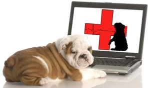 Pet Shelters during Disasters and Emergencies