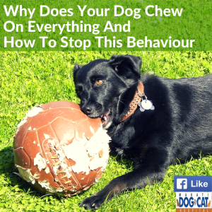 Why Does Your Dog Chew On Everything And How To Stop This Behaviour