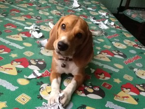 Clarky: Beagle