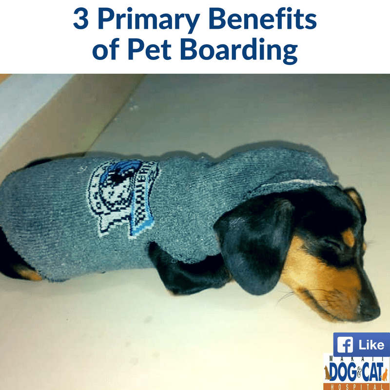 Pet Boarding Top 3 Primary Benefits