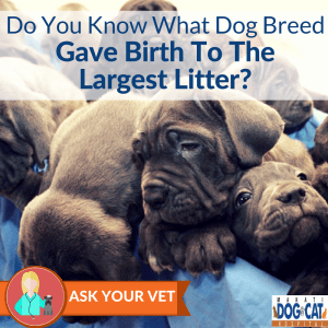 Do You Know What Dog Breed Gave Birth To The Largest Litter?